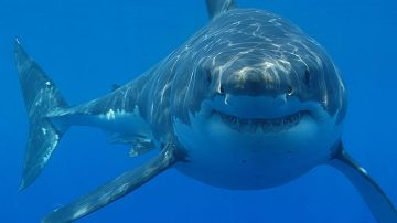 650x366_08051324_shark